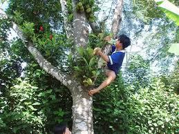Mơ thấy người trèo cây ngã